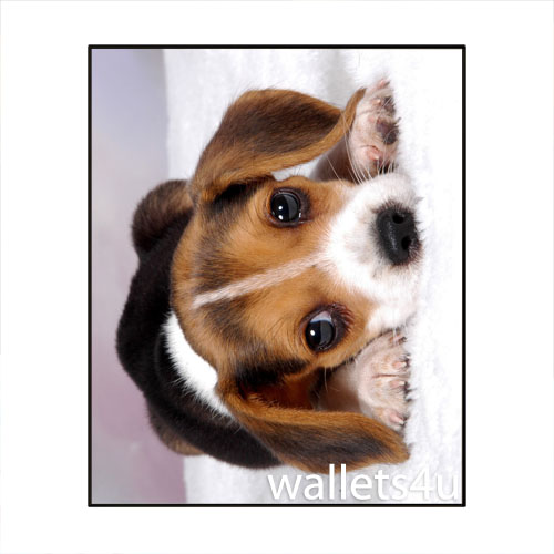Magic Wallet, Dog, Brown/Black - MWAP0083