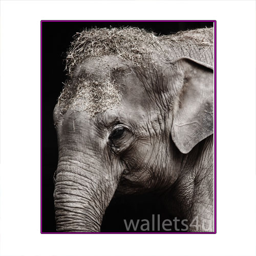 Magic Wallet, Elephant - MWAP0091