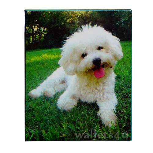 Magic Wallet, Dog, Poodle, White - MWAP0084