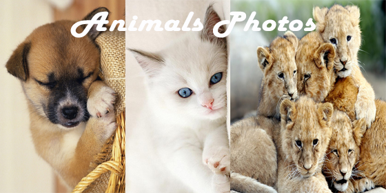 Magic Wallet Animals Photo